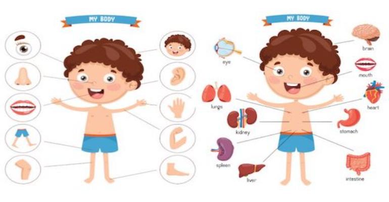 لغات پایه زبان انگلیسی -اعضای بدن به انگلیسی (Body parts)